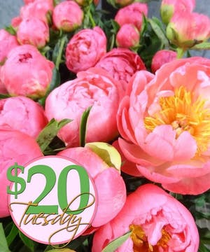 Send someone special flowers for only $20!