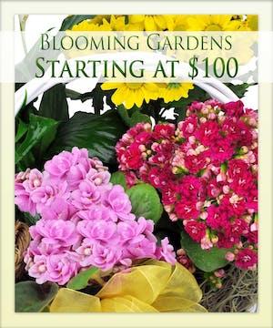 Blooming Gardens