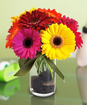 Vibrant Gerbera Daisies bring cheer & happiness!