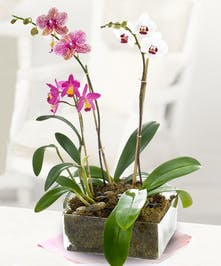 A unique garden featuring three orchid plants