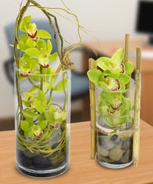 Green Cymbidium Orchids in a clear glass cylinder vase.
