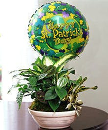 Assorted plants with balloon included!