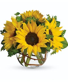 Sunny sunflowers in glass bowl St. Clair Shores, MI