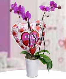 Exotic phalaenopsis orchids with a special heart-shaped mylar balloon.