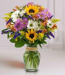 Sunflower Surprise