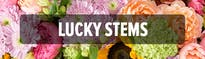Lucky Stems
